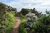 Sentiero di Mezzogiorno, hiking trail on Ustica Island, Sicily, Italy