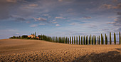 Alley of cypress trees to Agriturismo Poggio Covili in Tuscany in the sunset, Italy