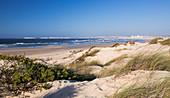 Dunes on the surfer beach Praia da Gamboa in Peniche, Portugal