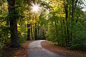 Weg unter Bäumen im Englischen Garten im Herbst am Nachmittag in München, Bayern\n