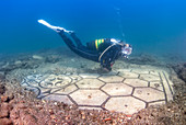 Diver swimming over a submerged ancient Roman mosaic, Baia (Baiae), Campi Flegrei (Phlegraean Fields), Campania, Italy, Mediterranean, Europe