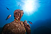 Submerged Roman statue with fish swimming around, underwater ancient Roman ruins, Baia (Baiae), Campi Flegrei (Phlegraean Fields), Campania, Italy, Europe
