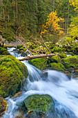Die Schwarzbach am Gollinger Wasserfall im Herbst, Tennengau, Österreich