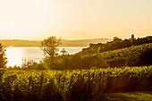 Ausblick auf Bodensee und Weinberge, Sonnenuntergang, Meersburg, Baden-Württemberg, Deutschland