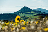 Panorama with Hegau volcanoes and Alps, at Engen, Hegau, Lake Constance, Baden-Württemberg, Germany