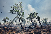 Bushfire in the north of Australia, Darwin, Northern Territory, Australia, Oceania