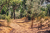 Natur in der Kimberley Region in Westaustralien, Australien, Ozeanien