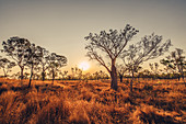 Boab tree in the Kimberley region, Western Australia, Oceania,