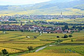 France, Haut Rhin, Route des Vins d'Alsace (Route of the wines of Alsace region), Niedermorschwihr and Ammerschwihr, general view of the villages and the vineyard