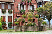 France, Haut Rhin, Route des Vins d'Alsace (Route of the wines of Alsace region), Bergheim, fountain, flowers and facades of houses