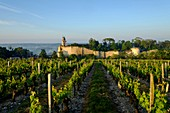 France, Indre et Loire, Chinon, listed as Word Heritage by UNESCO, castle of Chinon, the clock tower among vineyard