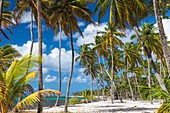 France, Guadeloupe (French West Indies), Marie Galante, Capesterre de Marie Galante, Feuillere beach