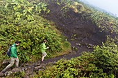 France, Guadeloupe (French West Indies), Basse Terre, Guadeloupe National Park, Saint Claude, hiking to the Soufriere volcano (MR)