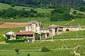 Frankreich, Saone et Loire, Weinberg Maconnais, Solutre Pouilly, Weiler Pouilly, Schloss von Pouilly