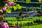 France, Indre et Loire, Loire Valley listed as World Heritage by UNESCO, gardens of the castle of Villandry