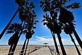 Palm trees and umbrella on the beach with the Pacific in the background, Santa Monica beach, California, USA