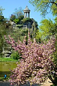 France, Paris, Buttes-Chaumont park in spring with a japanese cherry-tree (Prunus serrulata) in bloom
