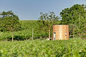 France, Gironde, Saint Jean de Blaignac, Castle Bonhoste, Vignobles Fournier, unusual accommodation, barrel