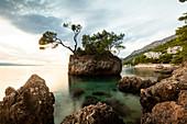 Trees growing on small rocky island in sea, Brela, Croatia