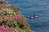 Stehpaddler an der Küste beim Ort Whinnyfold, Aberdeenshire