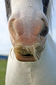 Snout of a horse