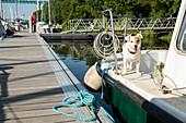 Kleiner Hund auf Hausboot im Hafen von La Roche-Bernard, Vilaine, Departement Morbihan, Bretagne, Frankreich, Europa