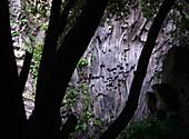 Lava wall in the Alcantara Gorge on Mount Etna, Sicily, Italy