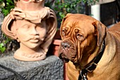 wrinkled dog and ceramic head, Catania, east coast, Sicily, Italy