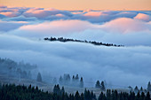 View from the Feldberg into a sea of fog, Southern Black Forest, Black Forest, Baden-Wuerttemberg, Germany, Europe