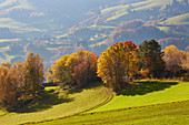 Autumn day at Holzer Kreuz im Wiesental, southern Black Forest, Black Forest, Baden-Wuerttemberg, Germany, Europe