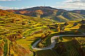 Blick über Weinberge auf Oberbergen und Totenkopf, Herbst, Kaiserstuhl, Baden-Württemberg, Deutschland, Europa
