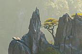 Kiefern und Berge, Yellow Montains, Huangshan, Provinz Anhui, China LA008618