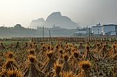 Dörfliche Reisfelder mit Reisstrohballen zum Trocknen, Guilin, Region Guangxi, China LA008006 trocknen