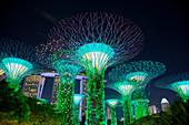 Supertrees Lit at Night\nMarina Bay Gardens\nSingapore\nTV000486