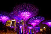 Supertrees Lit at Night\nMarina Bay Gardens\nSingapore\nTV000494