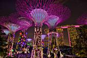 Supertrees Lit after Dark\nMarina Bay Gardens\nSingapore\nTV000586