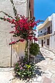 Typische weiße Gassen mit Blumen im Ort Ierápetra, Osten Kreta, Griechenland