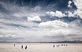 Salinas Grandes, Argentina - November 19, 2011: The Salinas Grandes is a large salt flat and stretches over the Salta and Jujuy provinces. The beautiful white landscape with the Andes Mountains in the background attracts a lot of visitors.