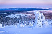 Snow-covered trees on the hills of Luosto, Finland