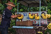 Kubaner verkauft Bananen in Pinar del Rio, Kuba