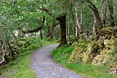 Hiking trail in the forest, long distance hiking trail Kerry Way; Killarney National Park, County Kerry, Ireland, Europe