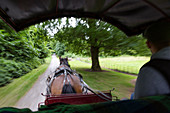 Horse-drawn carriage ride to Muckross house, long-distance hiking trail Kerry Way; Killarney National Park, County Kerry, Ireland, Europe