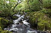 Canrooska River, Glengarriff Nature Reserve, County Cork, Ireland