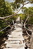 Hängebrücke duch die Mangroven des Mida Creek,  Watamu, Malindi, Kenia