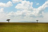Typische Landschaft der Savanne, Nationalpark Masai Mara, Serengeti, Kenia