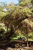 Minibus on safari, safari, Lake Nakuru National Park, Nakuru, Nakuru County, Kenya