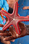 Starfish on the Blue Safari in through the mangroves of Mida Creek, Watamu, Malindi, Kenya