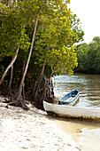Blue Safari in through the mangroves of Mida Creek, Watamu, Malindi, Kenya