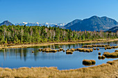 Water surface in the renatured raised bog, Kaisergebirge in the background, Nicklheimer Filz, Bavarian Alps, Upper Bavaria, Bavaria, Germany
