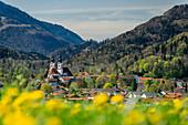 Church of Aschau with dandelion meadow in the foreground, Aschau, Chiemgau, Upper Bavaria, Bavaria, Germany